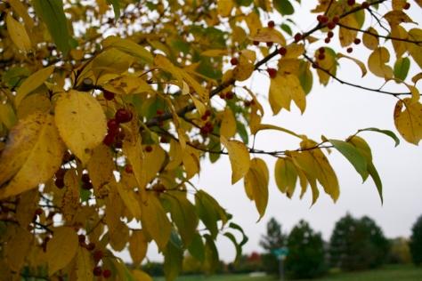 autumn13aa