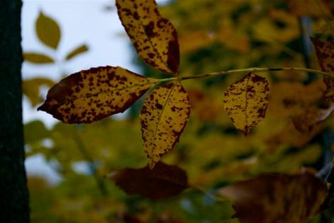 autumn13d