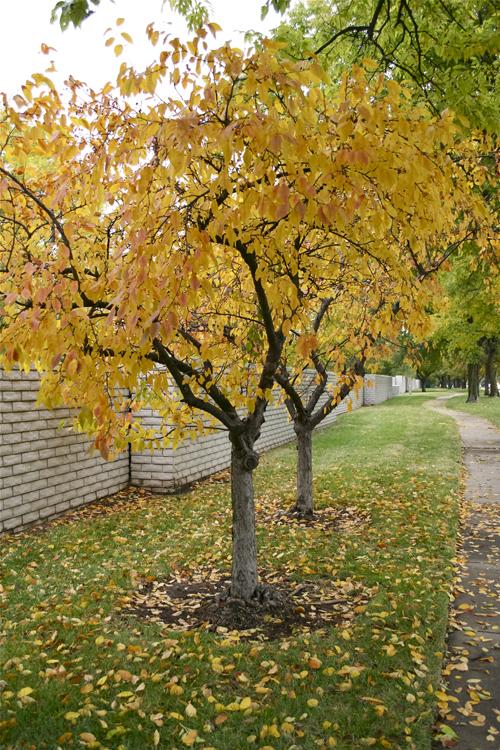 autumn13h