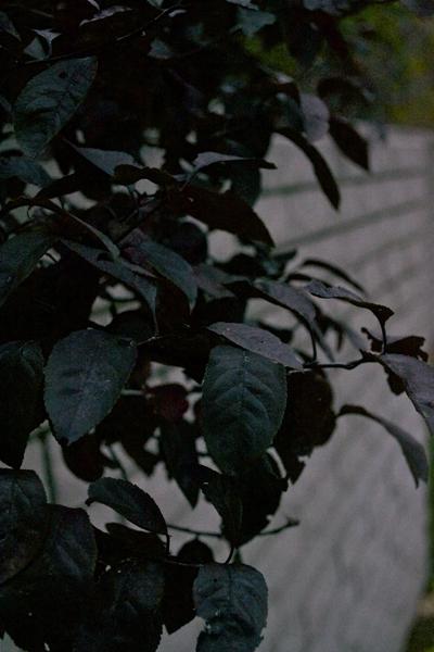 autumn13i