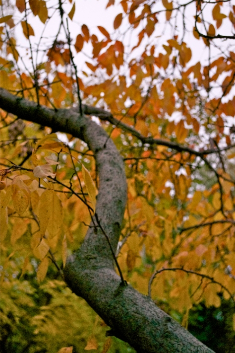 autumn13p