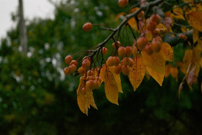 autumn13v