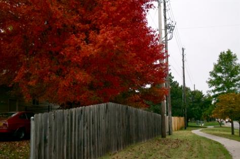 autumn13x