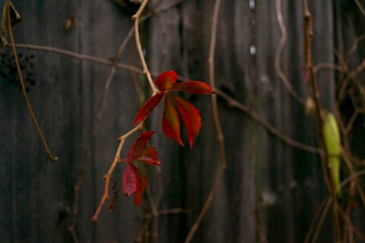 autumn13y