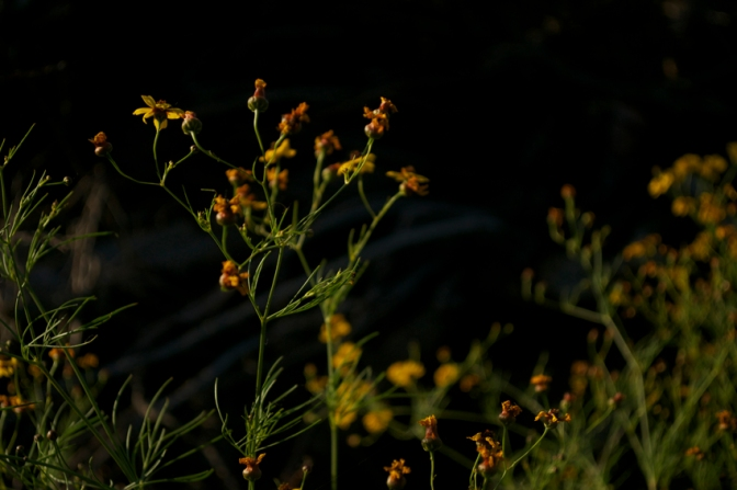 Wildflowers, Updates, and You.