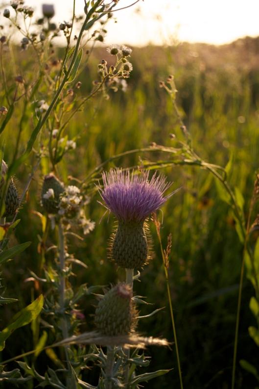wildflower10