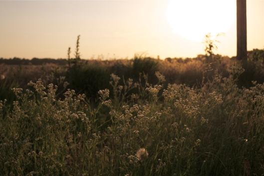wildflower4