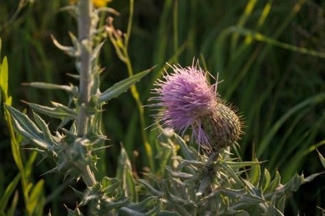 wildflower6